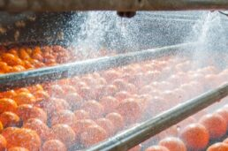 Food process industry